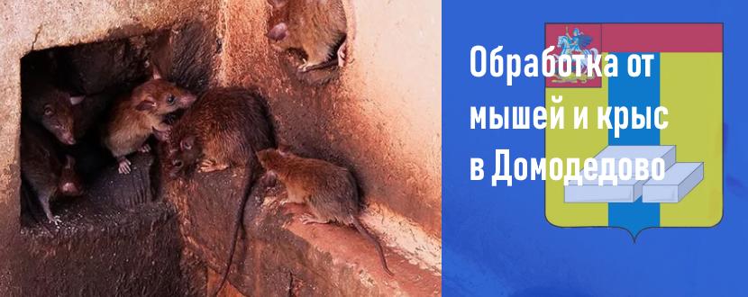 Обработка от мышей и крыс в Домодедово