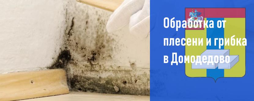 Обработка от плесени и грибка в Домодедово