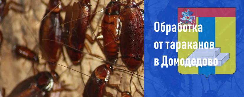 Обработка от тараканов в Домодедово