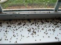 мухи в квартире